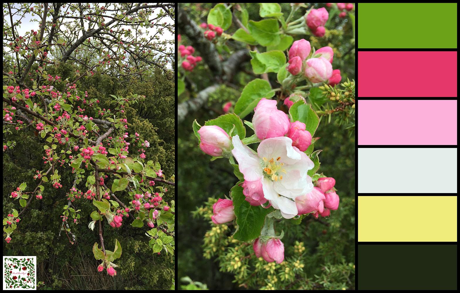 Õunapuu palett